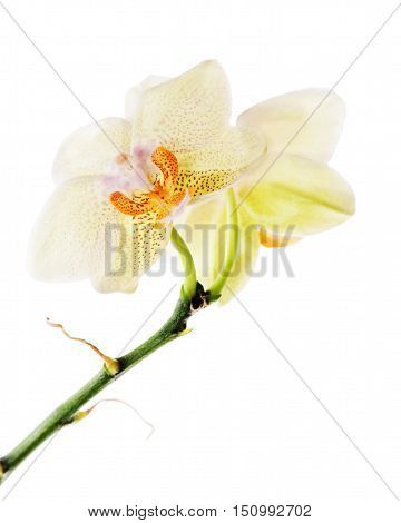 Orchid arrangement centerpiece isolated on white background.