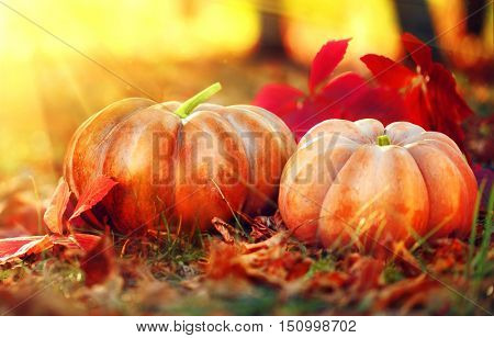 Autumn Halloween Pumpkin. Thanksgiving day background. Pumpkin patch. Beautiful Holiday Autumn festival concept. Fall scene. Orange pumpkins over beauty bright autumnal nature background. Harvest