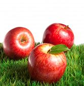Постер, плакат: Королевский Гала яблоки на траве с белым фоном