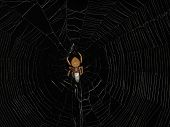 Animals - Spider And Web poster