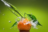 picture of green leaves  - Tangerine with green leaves and water splash on green background - JPG
