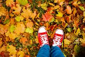 Conceptual hipster style image of legs in boots, trendy gumshoes on background of autumn leaves. Fee poster