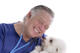 stock photo of bichon frise dog  - bichon frise licking happy smiling veterinarians face isolated over white - JPG