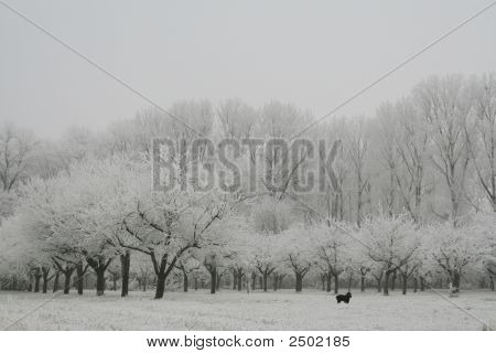 Tree In Snwo