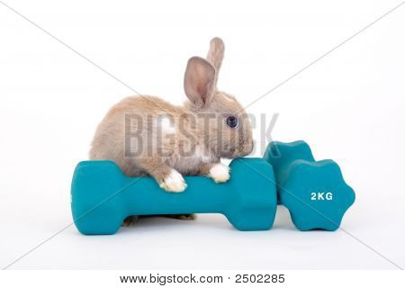 Brown Bunny And A Weight Isotated On White