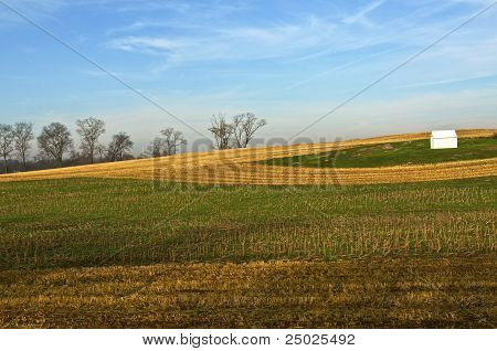 Harvested Cornfield