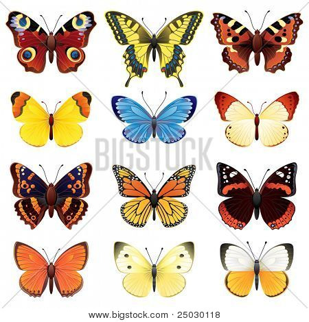 butterfly icon set - raster version