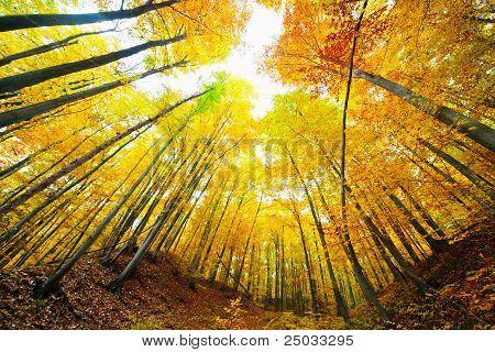 Colorful Autumnal Landscape