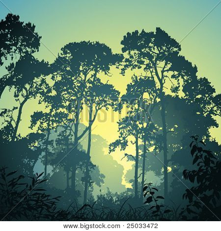 A Forest Landscape with Trees and Sunset, Sunrise
