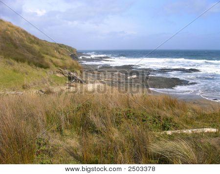 Coastline Of Grass, Drift Wood, And Rocks.