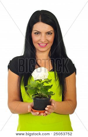 Florist Woman Holdng White Chrysanthemum