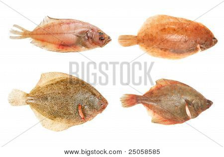 Flatfish Group