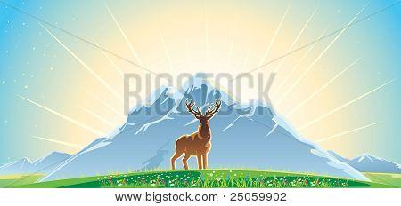 mountan landscape and deer