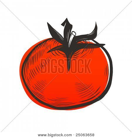 Tomato drawing. Vector illustration.