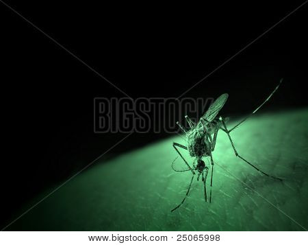 A mosquito sucking blood.