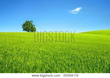 Field, tree and sky.