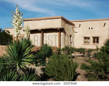 Adobe House W Blooming Cactus