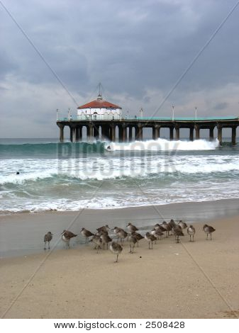 Sandpipers And Pier