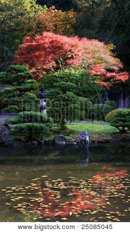 Arboretum, Seattle Japanese Garden #22
