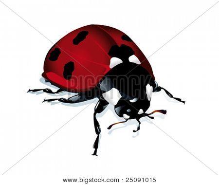 lucky beetle