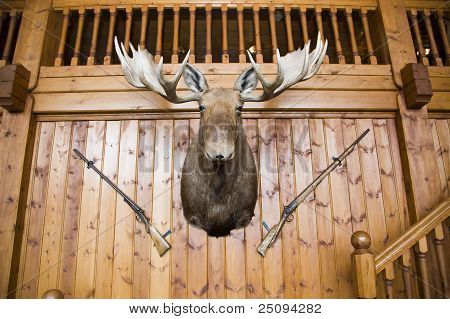 Moose Head And Guns On Wall
