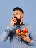 Man With Beard Holds Wicker Bowl With Fruit Isolated On Blue Background. Gardening And Fall Crops Co poster