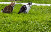 Two Adult Young Cats Black-white With Big Yellow Eyes And Tabby With Blue Eyes Are Friends And Sit T poster