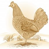picture of hen house  - Graphical chicken - JPG