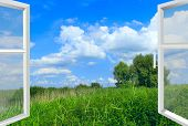 Opened Window To Summer Field With High Grass. Summer Landscape. Panorama With Green Grass Tree From poster