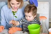 Mother And Son Planting Flower At Home. Gardening, Planting - Mom With Little Gardener Boy Planting  poster
