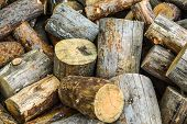 Firewood In A Heap - Big Logs. Heap Of The Firewood Cut On Logs. Cross Section Of The Timber, Cut Tr poster