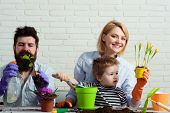 Little Son With Mother, Father Gardening At Home. Child With Parents Together Makes Home Garden. Cut poster