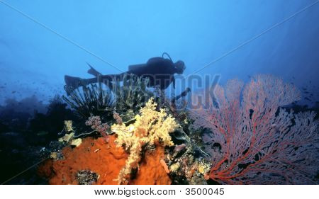 Scuba Diver Over South Pacific Reef