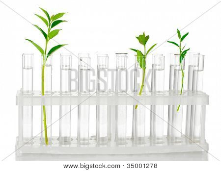 Test-tubes with a transparent solution and the plant isolated on white background close-up