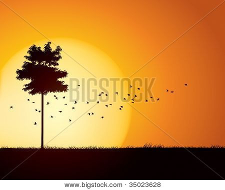 Birds migration through tranquil sunset scene