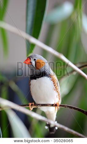 Haustier Vogel