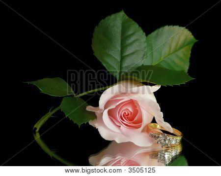Diamond Engagement Ring & Pink Rose Still Life