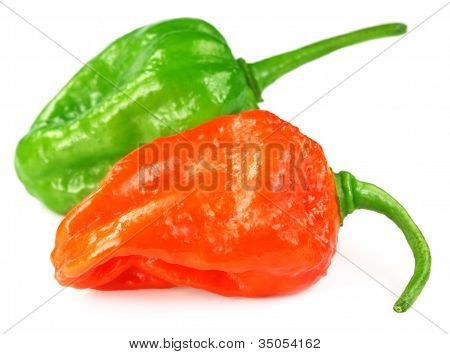 Two Naga Chilies of Indian Subcontinent