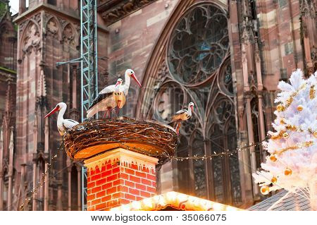 Stork Nest Near Cathedral