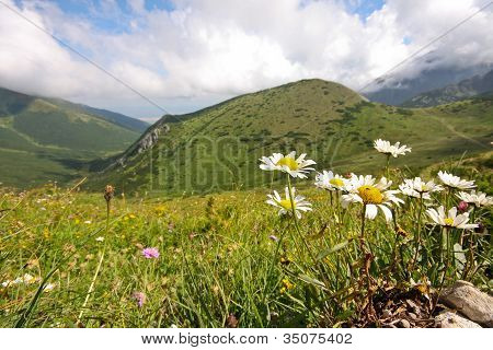 Flower In High Mountains