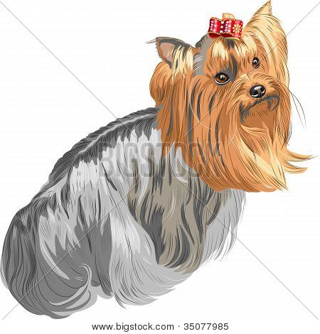 Vector Pedigreed Dog Yorkshire Terrier