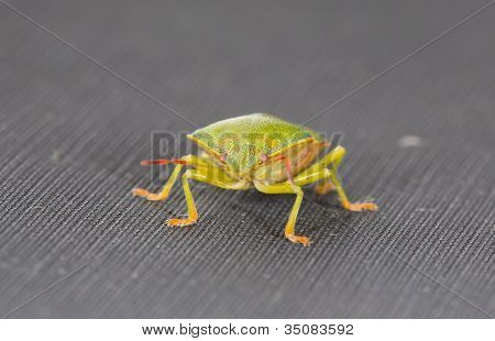 Green bug in closeup view