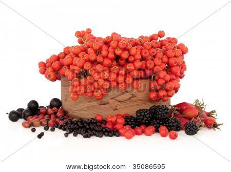 Elderberry, rose hip, hawthorn, blackberry, blackthorn, and rowan mountain ash berry fruit in a wooden bowl on white background. Very high in vitamin c and antioxidants.