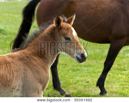 Horse, filly
