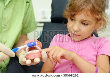Girl looks how to correctly brush teeth. For clarity, doctor uses artificial jaw.