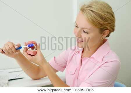 Young smiling dentist shows how to correctly brush teeth in dental clinic.