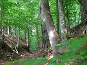 foto of natchez  - Original and historical walking path in the Natchez Trace Mississippi - JPG