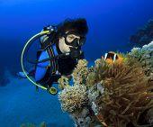 Постер, плакат: Женский аквалангист обнаруживает Немо