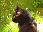 image of mica  - My black cat  - JPG