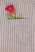 Rose in shirt pocket
